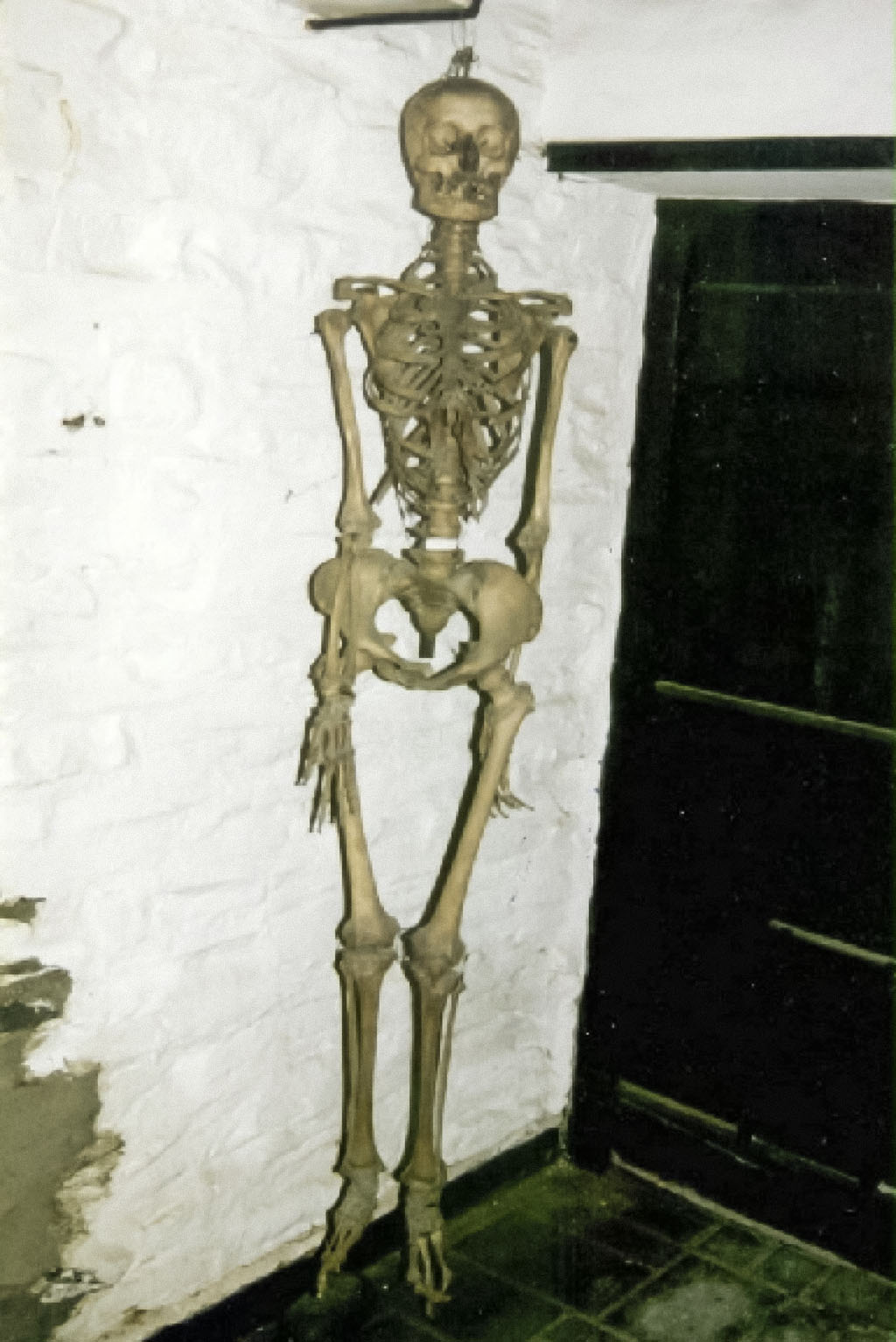 24 - Skeleton - Museum of Witchcraft and Magic
