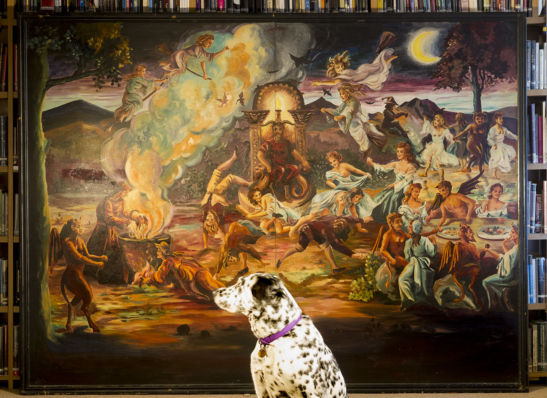 Amazing photo of Museum dog Tom
