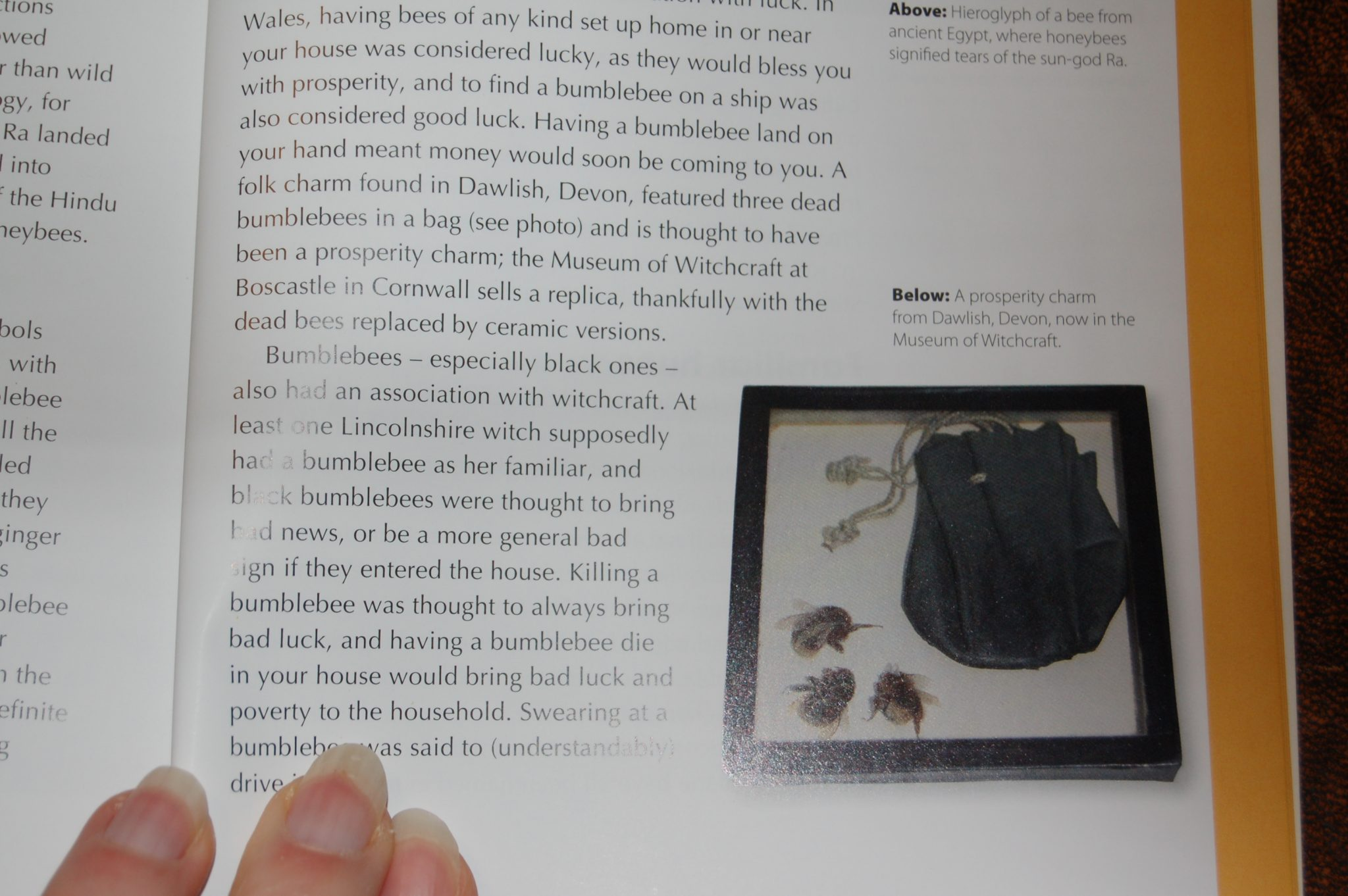 Museum object appears in Bumblebees book
