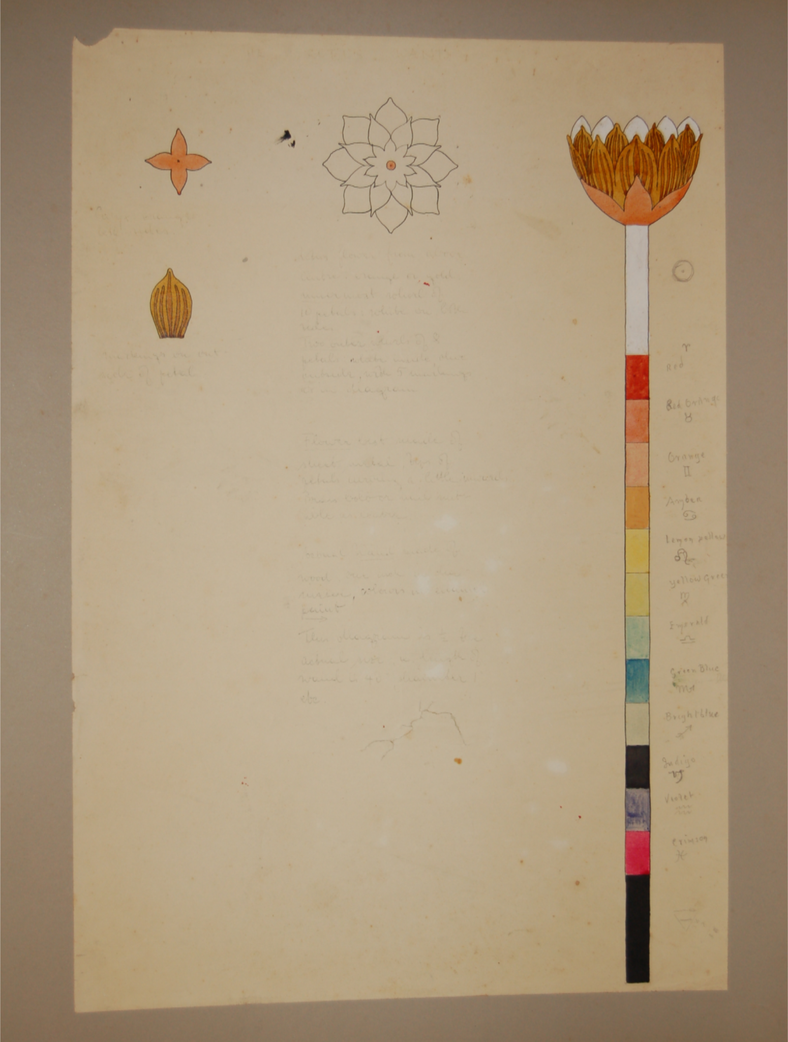 3941 Drawing Of A Lotus Wand By Steffi Grant Museum Of